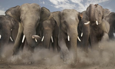 Add one heard of charging elephants...